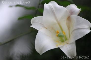 20090903_05