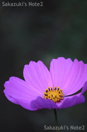 20090920_03