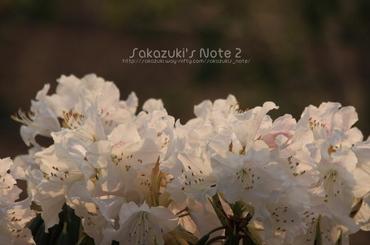 20100504_09