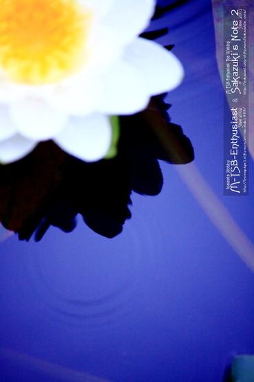 20110529_01
